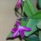 orchidea kiállítás 2011. nov.05. 248