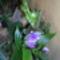 orchidea kiállítás 2011. nov.05. 272