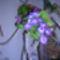 orchidea kiállítás 2011. nov.05. 285