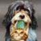 vicces kutya-cica kép