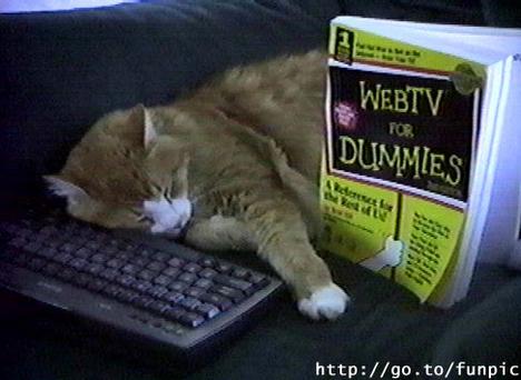 web tévé cicces