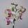 Orchideam-001_1411673_4587_t