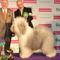 A világ legszebb kutyája 2012-ben! Jimy