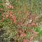 Tavaszi virágok 17