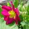 Tavaszi virágok 9