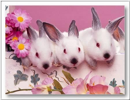 Húsvét 2012!