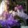 Orchidea-001_1414237_5806_t