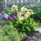 Áprilisi virágok
