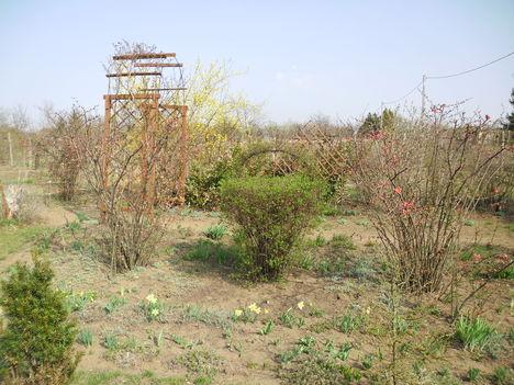 2012 kép a kertemből
