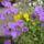 Lacziné Marika képei  - virágok