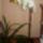 Árgyelán László orchideái