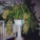 Fenyvesiné Sz.Éva Orchideái