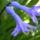 Jatcint-001_141331_52310_t
