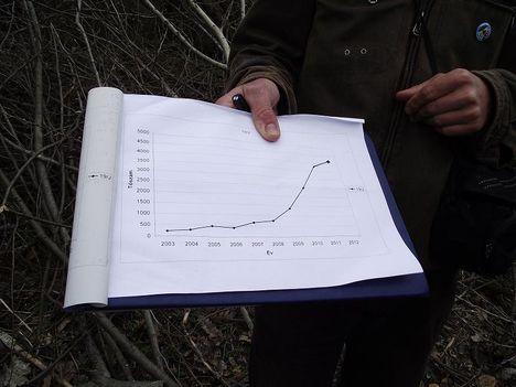 ligeti csillagvirág 2012. eredmménye kb.4325 db