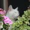 Mikka Makka az én cicám