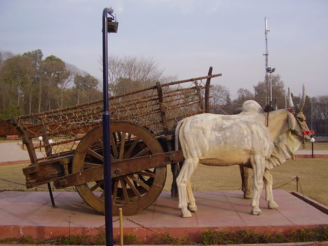 punjab Bull_Cart_of_Punjab