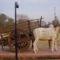 punjab Bull_Cart_of_Punjab