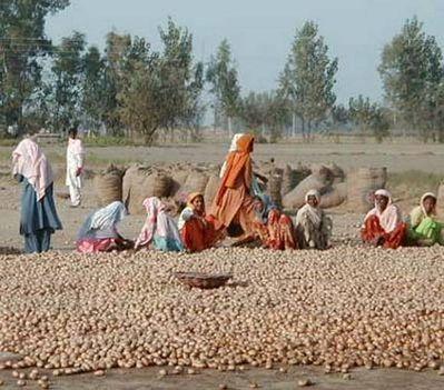 punjabi nők krumplival