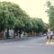 Sümeg-Kossuth utca, gesztenyefákkal