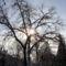 Sümeg-téli napsütés a fák közt