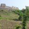 Sümeg-vár szőlő ültetvénnyel