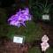 Kép Nemzetközi orchidea kiállítás 2012.04.15. 004