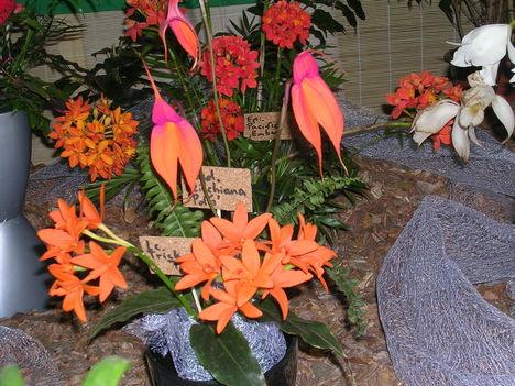 Kép Nemzetközi orchidea kiállítás 2012.04.15. 013