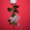 Egy rózsaszál szebben beszél....