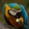madarak 3