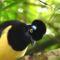 madarak 4