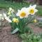 2012 kertben készült képek 3