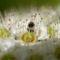 DSC_6678 800_540 spring flusch