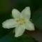 fehérvirág 1modres700