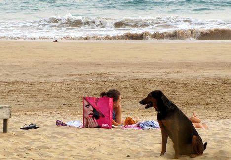 Cejlon - kutya a tengerparton