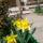 Etus virágai