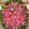 Kegyelet virágai 1