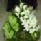 Kegyelet virágai 4