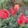 Rozál és Józsi kerti virágai