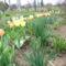 2012 kertben készült képek 1