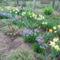 2012 kertben készült képek 2