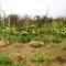 2012 kertben készült képek 4