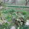2012 kertben készült képek 5