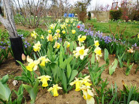 2012 kertben készült képek 6