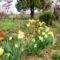 2012 kertben készült képek 7
