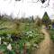 2012 kertben készült képek 8