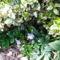 2012 kertben készült képek 9