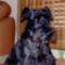 Bogi /2012. 02.17-én elveszett Zalakaroson