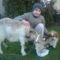 Sárlottom és Vili kutyám