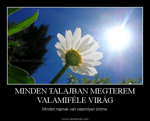 Virág idézetek