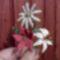 Margaréta, tulipán, liliom